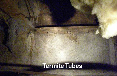 12-termite_tubes-2.jpg